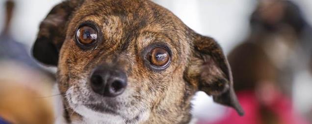 Rede abre agenda para castração de cães e gatos nesta quarta